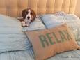 daizi-on-bed