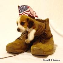daizi-puppy-all-american
